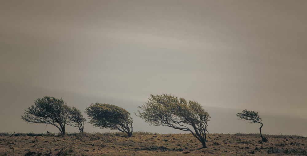trees bent in the wind Arid Climate Beauty In Nature Climate Day Environment Field Growth Isolated Land Landscape Nature No People Non-urban Scene Outdoors Plant Remote Scenics - Nature Sky Solitude Tranquil Scene Tranquility Tree