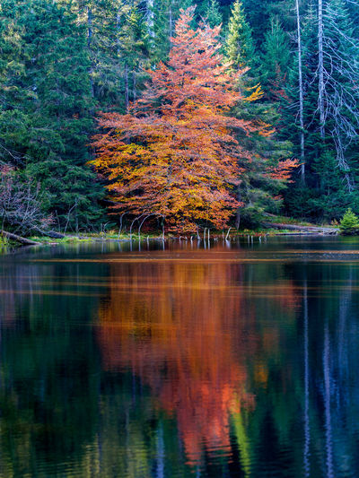 Autumn trees by lake in forest