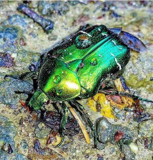 Samsung Galaxy S7 Edge Animal Wildlife Nature Outdoors Samsungphotography Forest Bugslife Anomalasolida