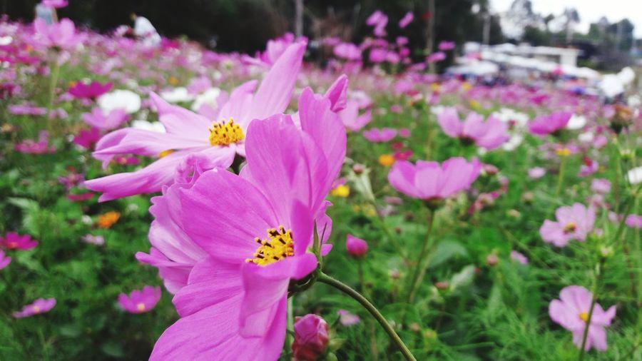 It nice flower