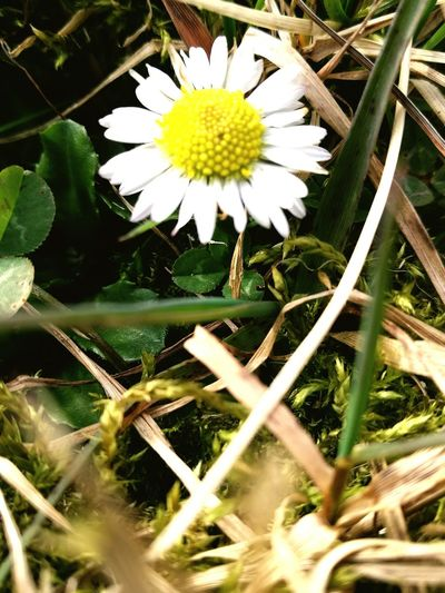 Flower Nature Growth Plant White Color Beauty In Nature Fragility Flower Head Freshness Petal Outdoors Close-up Pollen No People Day