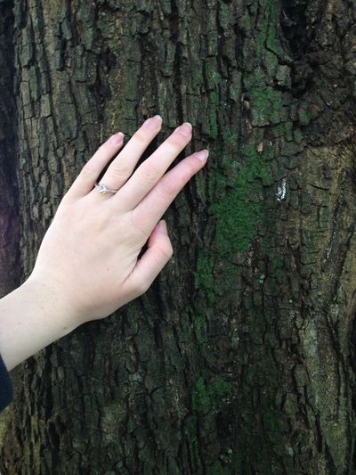 Cropped image of woman hand touching on tree trunk