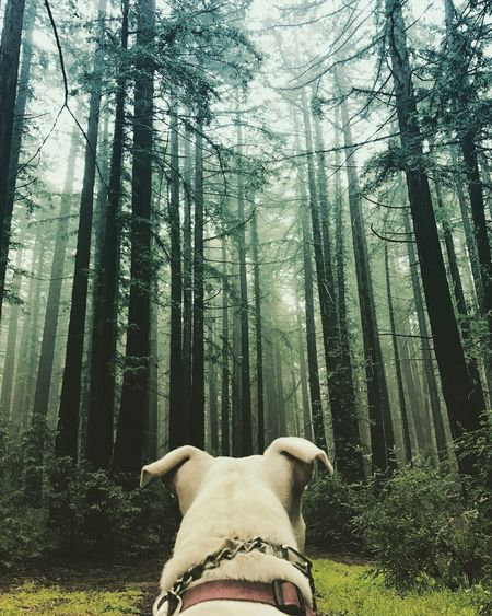 Low angle view of a dog in forest