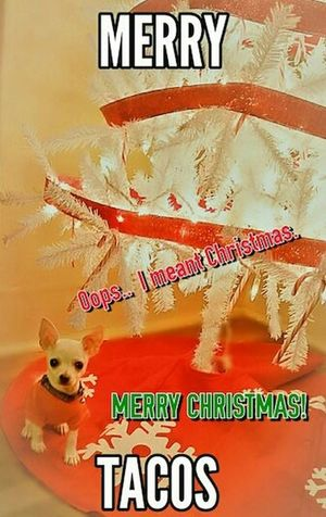 My Best Photo 2015 Caliber Best Christmas Lights Mine And Ebeths Baby Christmas Cute Puppy