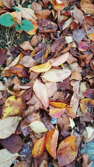 풍성한 낙엽도 안녀엉~