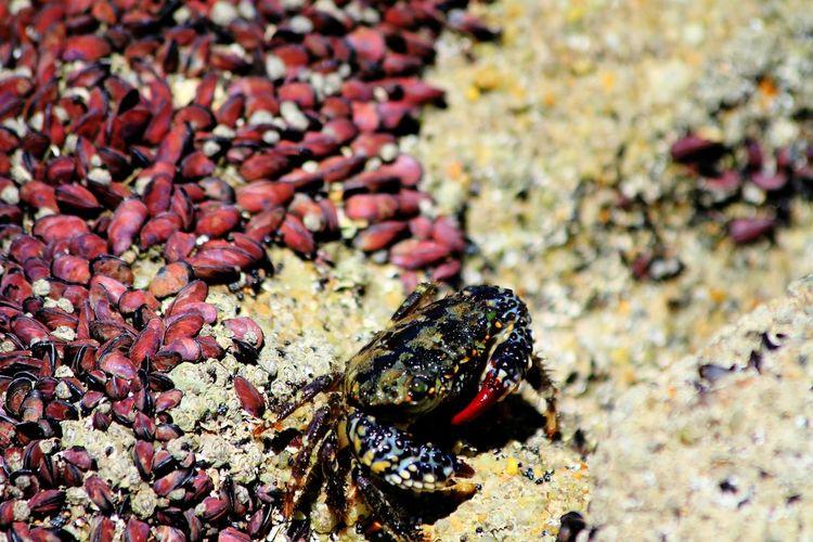 Close-Up Of Crab On Ground