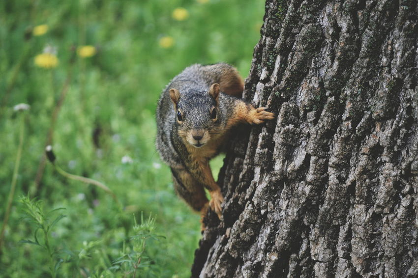 One Animal Animals In The Wild Nature No People Day Outdoors Close-up Mammal Animal Wildlife Horizontal Nature Sqirrels