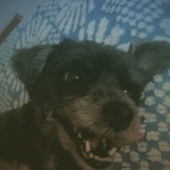 Feliz pra cachorro (literalmente).❤🙃 Dog Babydog Bella Sweet Selfiedog VSCO