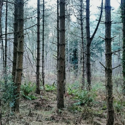 Tree Forest Nature Tree Trunk Scenics WoodLand Growth Beauty In Nature Tranquility Outdoors Landscape No People Portsmouthphotographer England