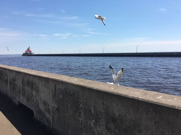 June 18, 2016 Animal Themes Beauty In Nature Bird Blue Cloud Day Duluth Flying Grandma's Marathon Horizon Over Water Mid-air Minnesota Nature No People Outdoors Scenics Sea Sea Bird Seagull Sky Spread Wings Tranquil Scene Tranquility Water Wildlife