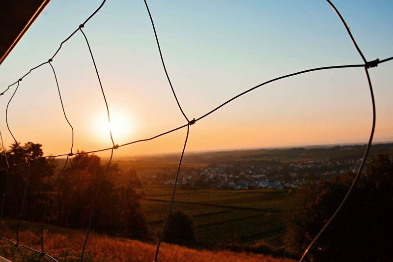 Sunset Field No