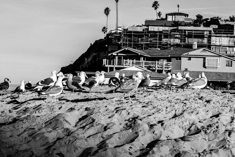 Outdoors Construction Site Day No People Sky Nature Moonlight Beach Encinitas California Sand Beach Sea Built Structure Animal Wildlife Bird Animals In The Wild Sea Gull Bird Photography Birds_collection Black And White Nature Black And White Collection  Blackandwhitephotography Black And White Collection  Black And White Photography Black And White Animal Themes