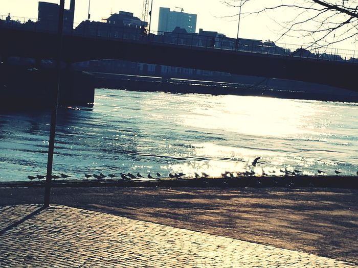 Birds Dutch Local Boulevard Birds Sparkles The Maas Sunlight Urbanphotography Water Outdoors No People