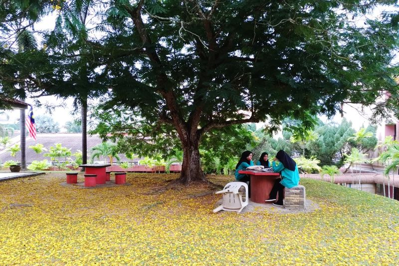 Study group under big tree Yellow Flower Big Tree Three People Friendsforever Friendship Light Discussion Learning Process Nice Moment Study Time Learning Time Tree Togetherness Full Length Sitting Women