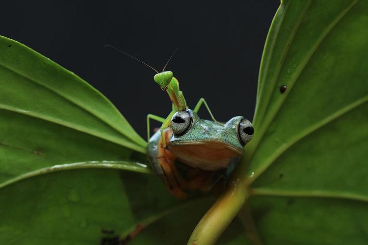 #Frog #macro