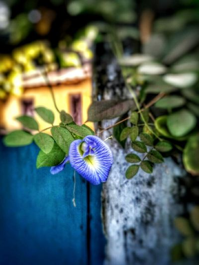 Flower Fragility Nature Plant Beauty In Nature Flower Head Freshness Growth Close-up No People Blooming Day Water Outdoors Passion Flower
