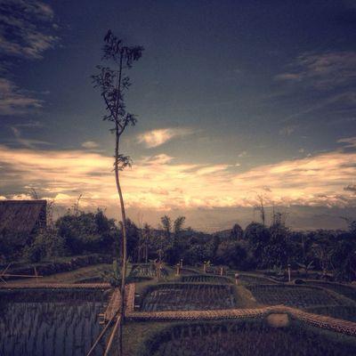 Peace on earth AMPt - Escape EyeEm Indonesia EyeEm Nature Lover Iphonesia