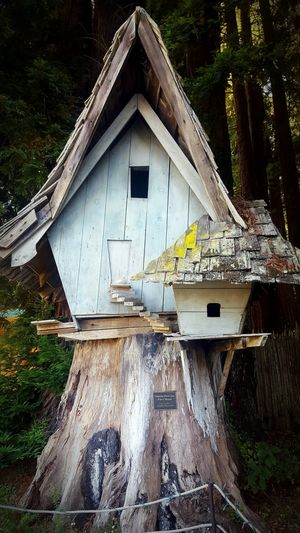 At the Zoo. Northcoast Northcalifornia WestCoast .In between the Redwoods . Redwood Trees Hanging Out Taking Photos Taking Pictures Little House FairyHouse Cute Check This Out Woodenhouse Tinyhouses The Great Outdoors - 2017 EyeEm Awards