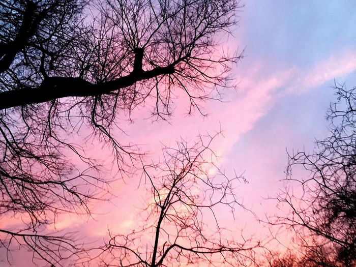 Tree Nature Branch Sky Low Angle View Beauty In Nature Bare Tree Growth Outdoors Cloud - Sky Sunset Treetop Day Lost In The Landscape