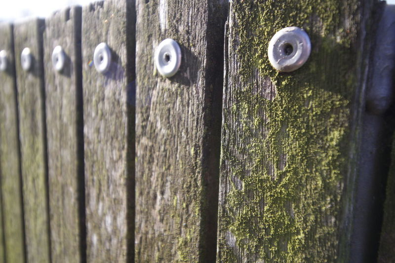 Close-up Day Door Moss No People Outdoors Textured  Wood - Material