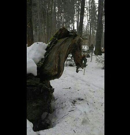 Пермь балатовский лес