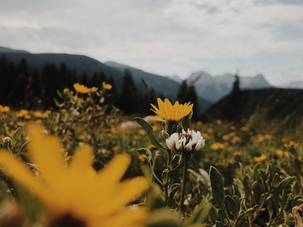 EyeEmNewHere Beauty In Nature Mountains Colorado Plant Flower Beauty In Nature Growth Flowering Plant Nature Yellow Field No People Land Landscape EyeEmNewHere