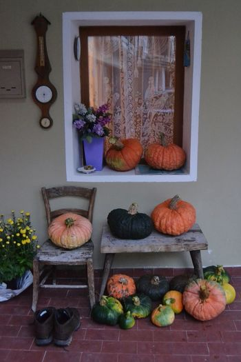 Halloween's pumpkins Window Black Color Nero Black Green Color Green Verde Frutta Orange Color Orange Arancione Colori Colors Pumpkins Zucca Zucche Cibo Food Food And Drink Freshness Pumpkin No People Healthy Eating Wellbeing Vegetable Still Life Plant Fruit Large Group Of Objects Flower Autumn Mood