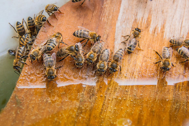 Animal Animal Family Animal Themes Animal Wildlife Animals In The Wild APIculture Bee Beehive Close-up Day Group Of Animals Honey Bee Insect Invertebrate Large Group Of Animals Nature No People Water Wood - Material Zoology