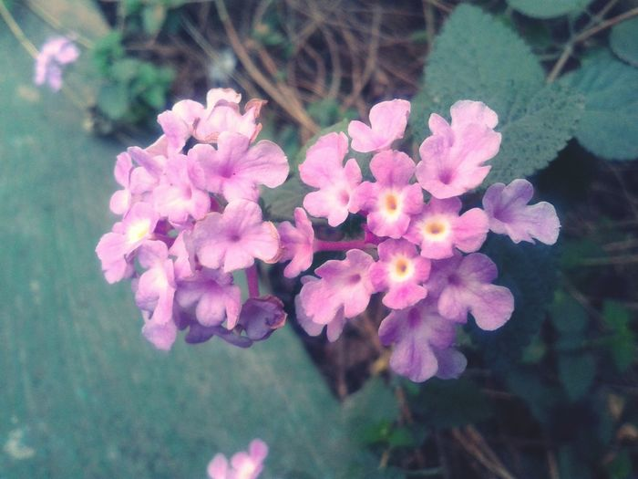 Flower My Clicks