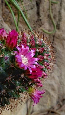 A little prick and a flower. 😀 Focus On Subject Close Up Photography Colorful Hanging Indoors  Flowering Cactus