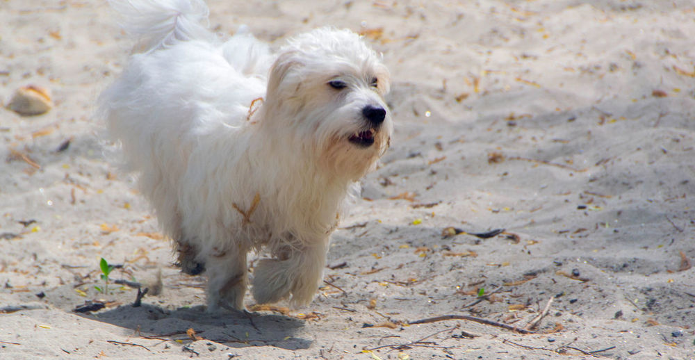 Portrait of a dog running on ground