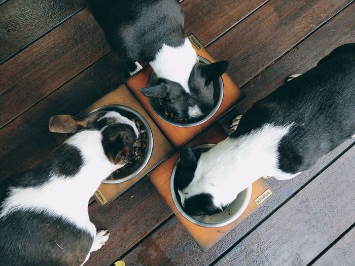 High angle view of dogs relaxing on wood