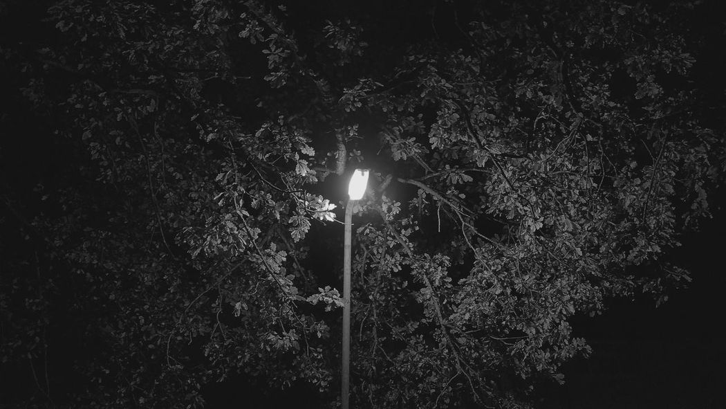 Monochrome Photography Leaves In The Light Trees In The Night Light Street Post Blackandwhite Bnw Street Trees In The Night Monochrome