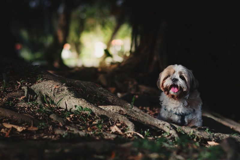 Portrait Of Dog Sitting Against Tree In Forest
