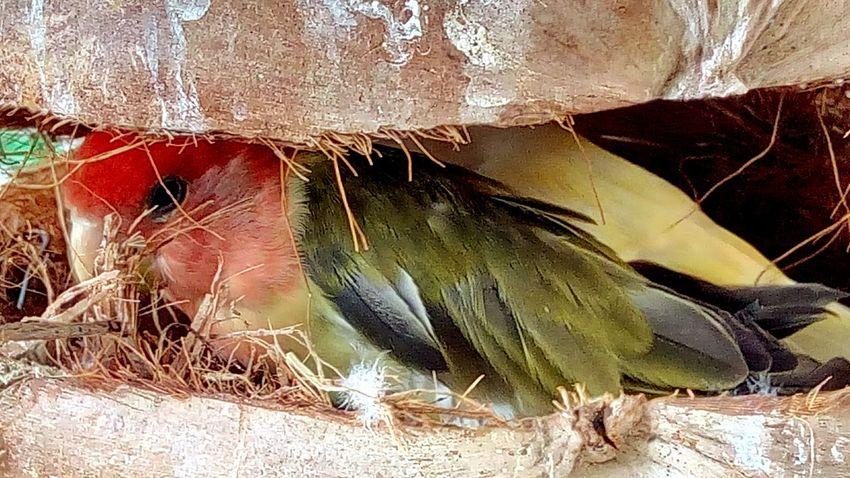 Bird Bird In The Zoo Bird Nest Nest