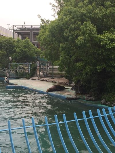Animals Creatures Day Nature No People Outdoors Seal Water Zoo