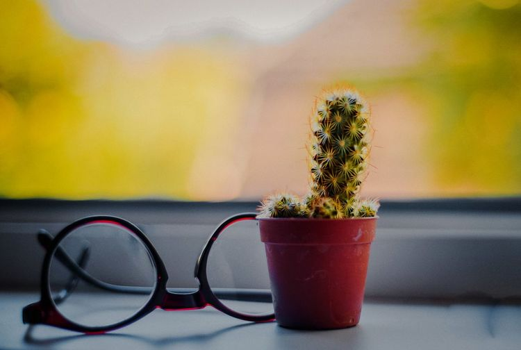 Plant Home Homeplants Nature Lifestyles Life Live Glasses Glass - Material Bokeh Backgrounds Background Blur Cactus Window Close-up Potted Plant Table Close-up Plant Barrel Cactus Cactus Needle - Plant Part Pine Cone Prickly Pear Cactus Flower Pot Plant Life Saguaro Cactus Succulent Plant Houseplant Spiky