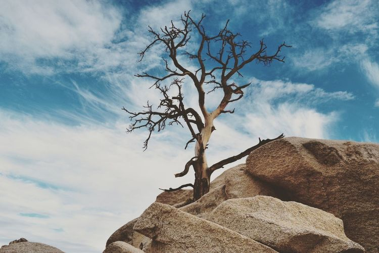 Cloud - Sky Tree Bare Tree Sky Branch Rock - Object Nature Outdoors No People Beauty In Nature Survival Day Joshua Tree National Park Dessert EyeEmNewHere The Great Outdoors - 2017 EyeEm Awards Live For The Story