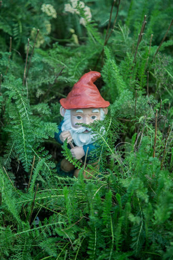 Animal Themes Beauty In Nature Close-up Day Fly Agaric Fly Agaric Mushroom Forest Fragility Freshness Fungus Gnome Gnomes Grass Green Color Growth Mushroom Nature No People Outdoors Toadstool Tree