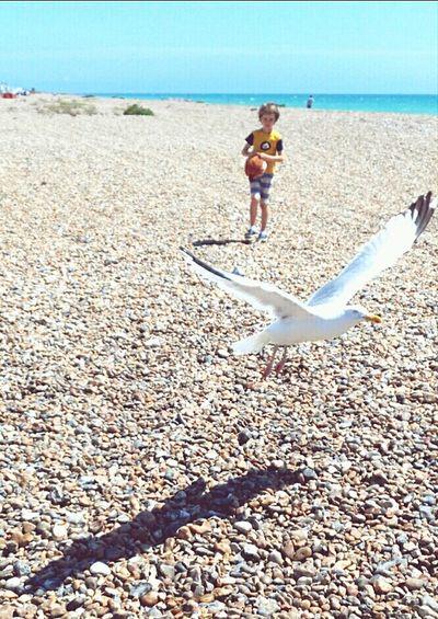 Relaxing Taking Photos Enjoying Life Hello World Beach Sea And Sky Sea Dog Beauty In Nature Bird