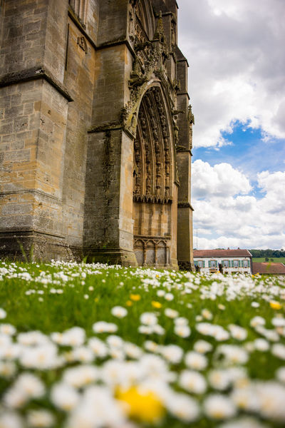 Church Grass Paquerettes