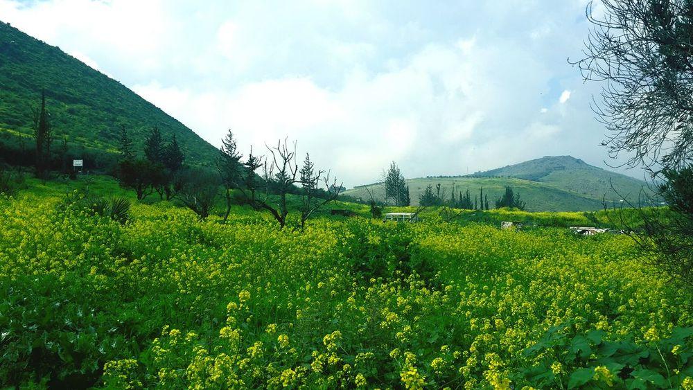 Holyland Mountain Mountain View Flowers Yellow Flower EyeEm Best Shots - Flowers Nature Beautiful Nature God's Beauty