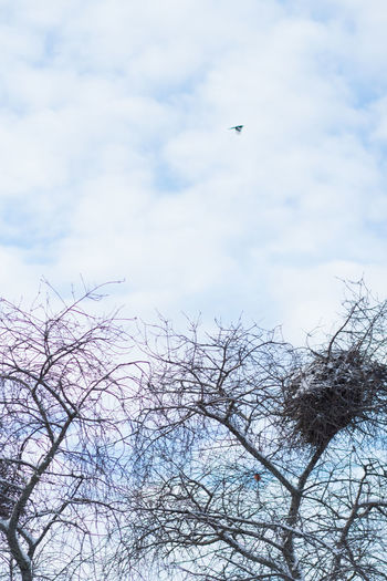 Bird Vertebrate Animal Animal Themes Animals In The Wild Animal Wildlife Tree Sky Plant One Animal Flying Cloud - Sky No People Nature Branch Bare Tree Day Low Angle View Beauty In Nature Tranquility Outdoors Bird Nest Winter In Sweden Sweden Nature Blue Sky And Clouds