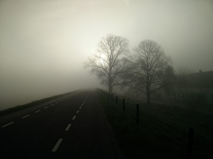 EMPTY COUNTRY ROAD ALONG BARE TREES IN FOGGY WEATHER