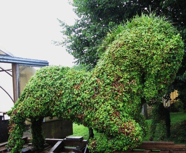 Topiary Horse Growth Plant Nature Tree Summer Outdoors Architecture No People Building Exterior Day