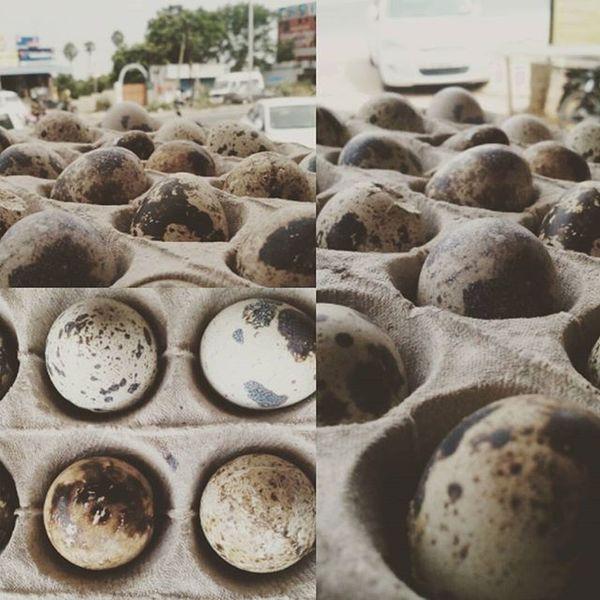 Quail's Egg. Natural art. Art Natural Quailsegg Egg Eggs Eggart Mobilephotography Mobileupload JD JDphotography
