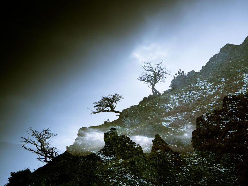 double exposure Double Exposure Beauty In Nature Day Doubleexposure Forest Landscape Landscape_photography Landscapes Low Angle View Mountain Nature No People Outdoors Scenics Sky Tranquil Scene Tranquility Tree