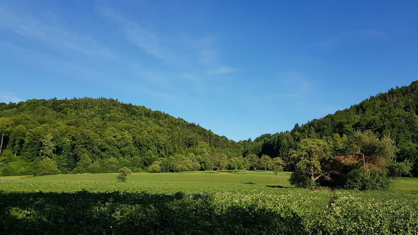 Green Color Tree Nature No People Beauty In Nature Growth Sky Day Outdoors Freshness Schwarzwald Wutach UneditedNature,Perfectand Fresh Vacations