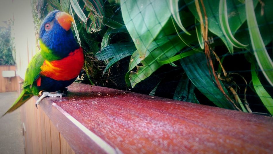 Beautiful little bird Zoo Animals Life The Week On EyeEm