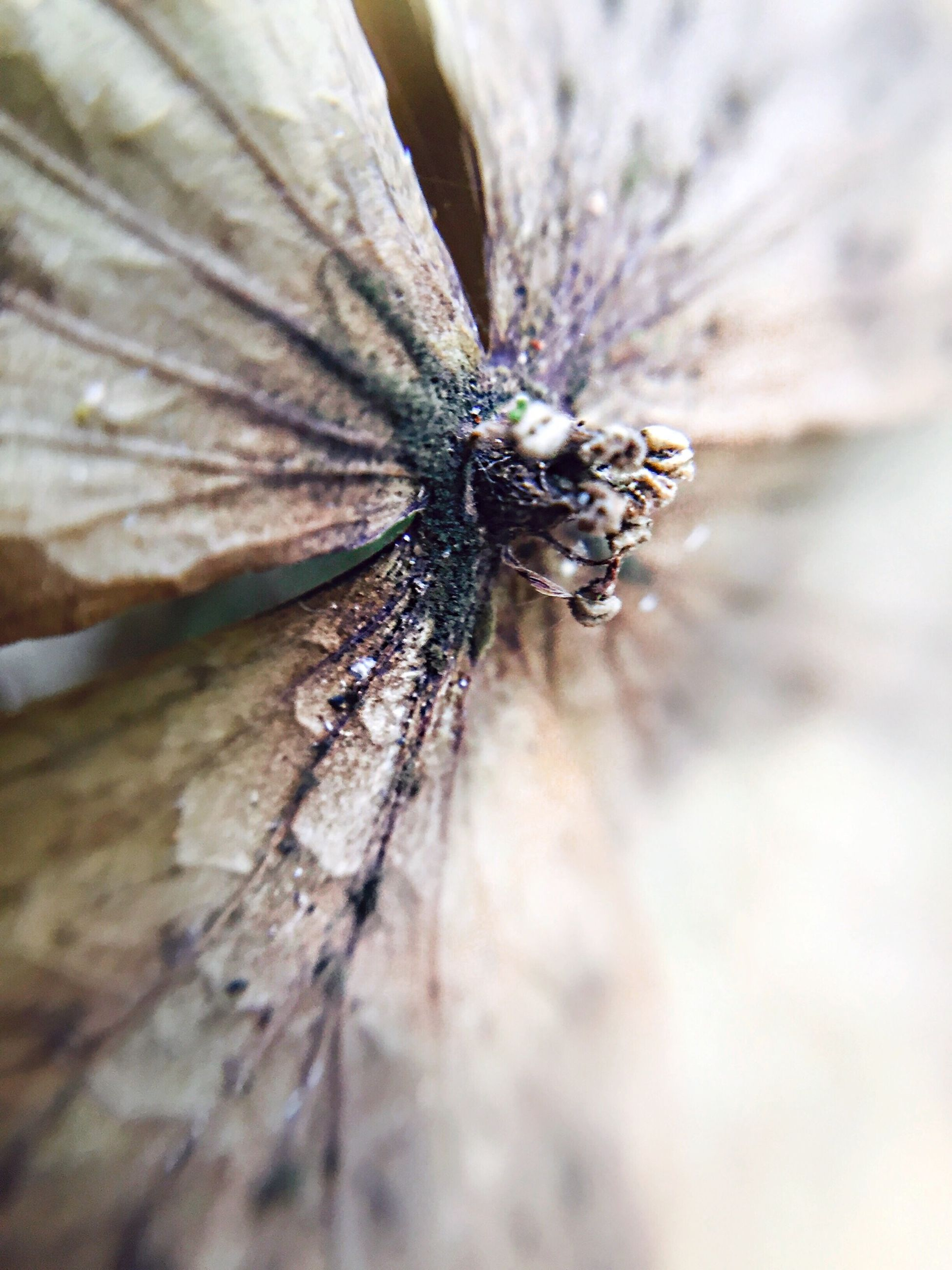 insect, one animal, animal themes, animals in the wild, wildlife, close-up, selective focus, nature, focus on foreground, animal wing, full length, macro, outdoors, wood - material, arthropod, day, fragility, animal antenna, no people, beauty in nature
